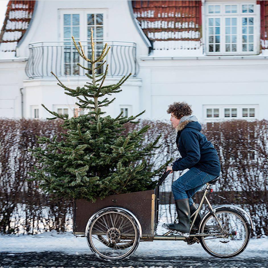gesch ftskunden santa fidi weihnachtsb ume online kaufen. Black Bedroom Furniture Sets. Home Design Ideas