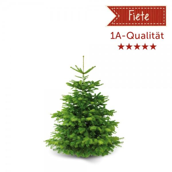 Weihnachtsbaum 'Fiete' ca. 100 cm
